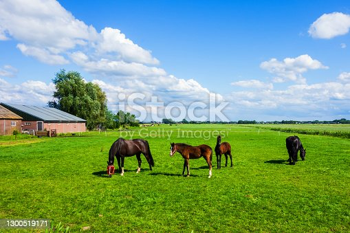Scenery with meadows in the Netherlands