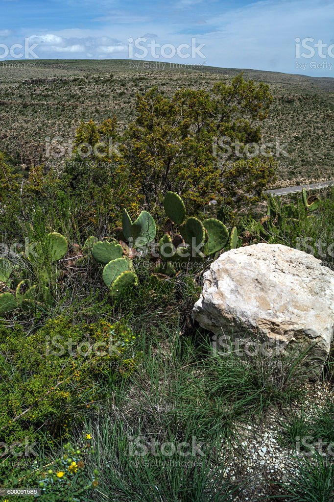 Landscape with cactus, plants, grass, rocks in New Mexico stock photo