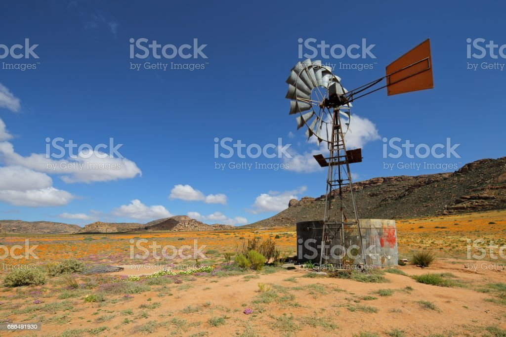 Landscape with colorful wild flowers and windmill stock photo