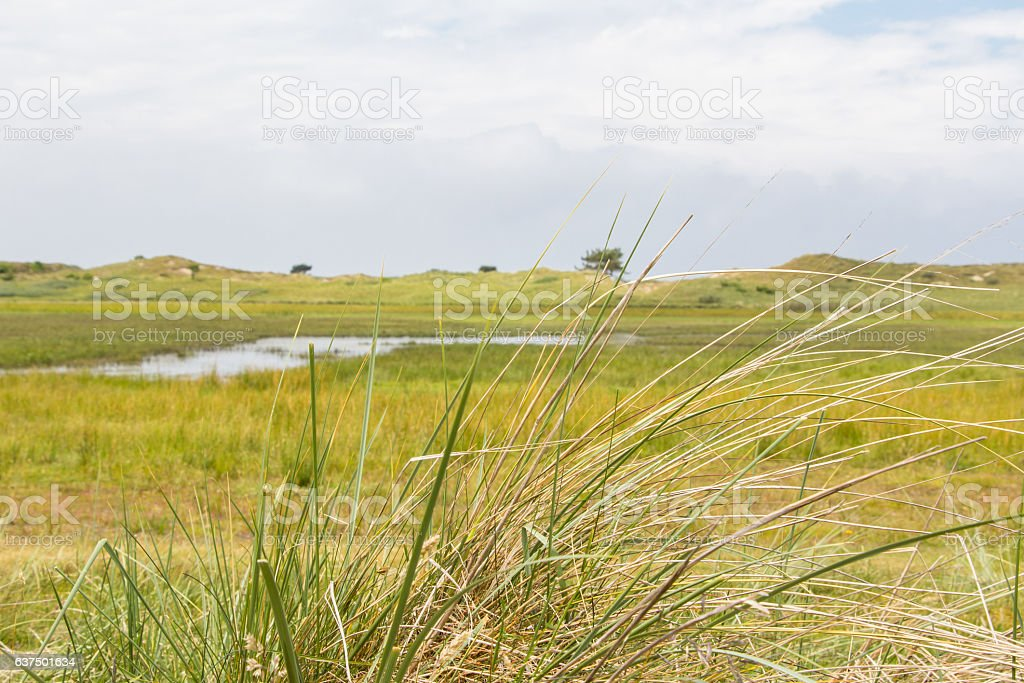 Landscape with culm grass – Foto