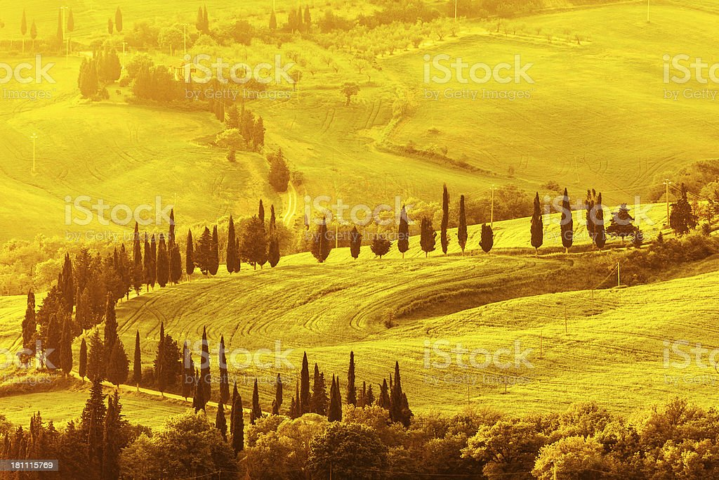 Landscape With Cypress Lined Country Road, Val d'Orcia, Tuscany, Italy royalty-free stock photo