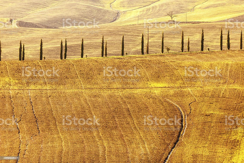 Landscape With Cypress Lined Road, Tuscany, Italy royalty-free stock photo