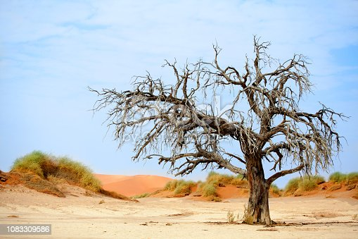 1083309578istockphoto Landscape with dead dry camel acacia tree with big crown on orange sand dunes and blue sky background, Naukluft National Park Namib Desert, Namibia 1083309586