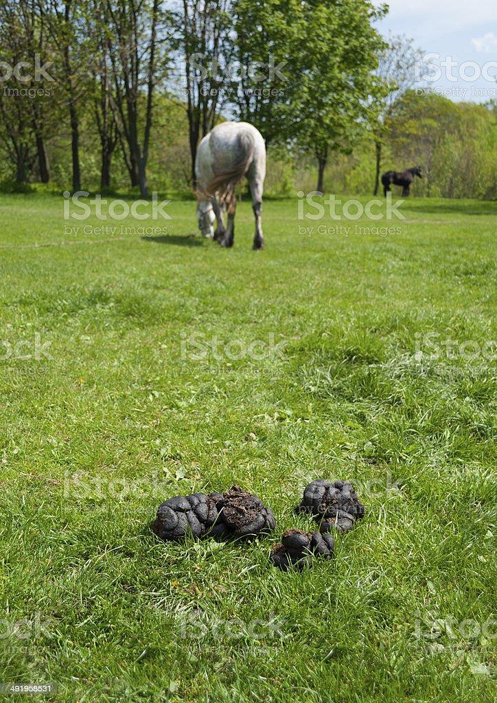 Landschaft Mit Kot Gras Und Pferde Stock Fotografie Und Mehr Bilder