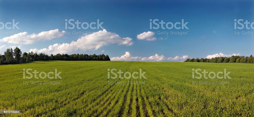 Landscape with field. Panorama. stock photo