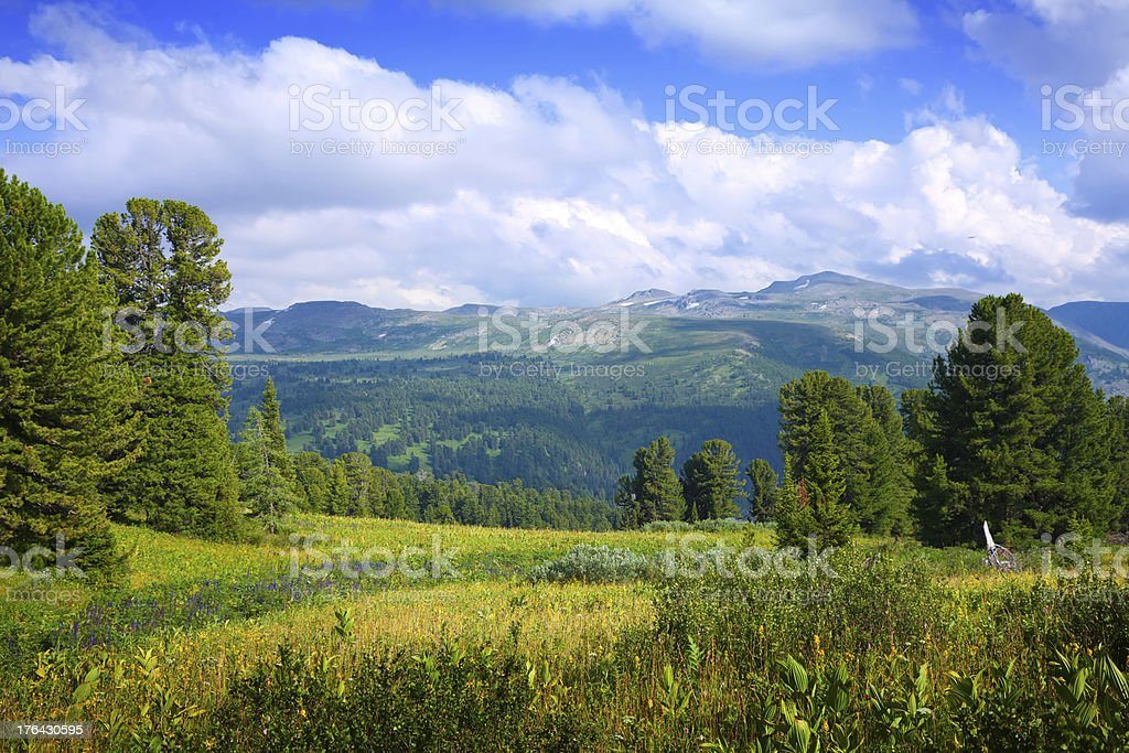 Landscape with forest mountains stock photo