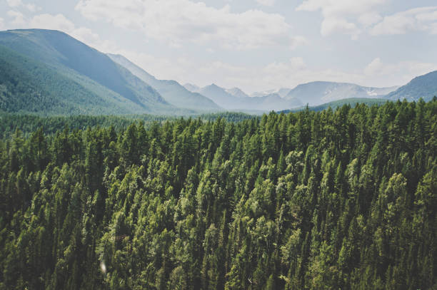 Landscape with forest mountains picture id940945904?b=1&k=6&m=940945904&s=612x612&w=0&h=zwfl41gbjpr2z pkdzyr kjc3bynqtgc7zavgn9khde=