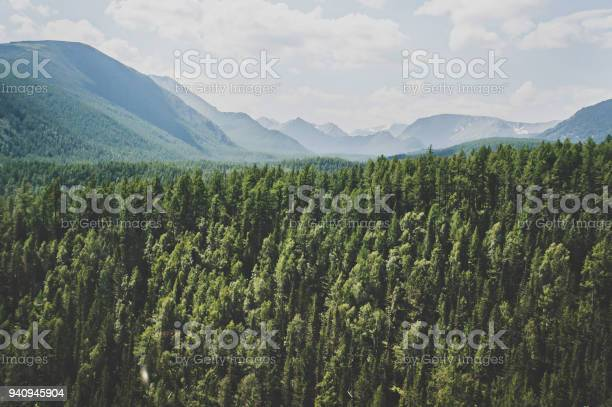 Photo of Landscape with forest mountains.