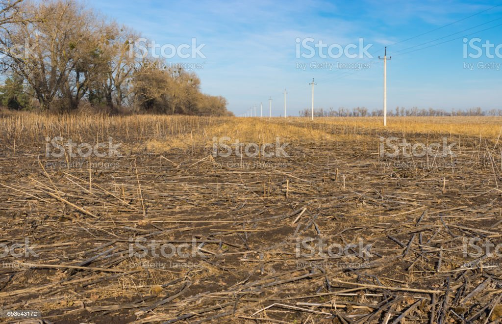 Landscape with harvested sunflowers field in Ukraine stock photo