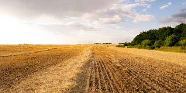 landscape with harvested wheat field in Ukraine Photo landscape with harvested wheat field in Ukraine monoculture stock pictures, royalty-free photos & images