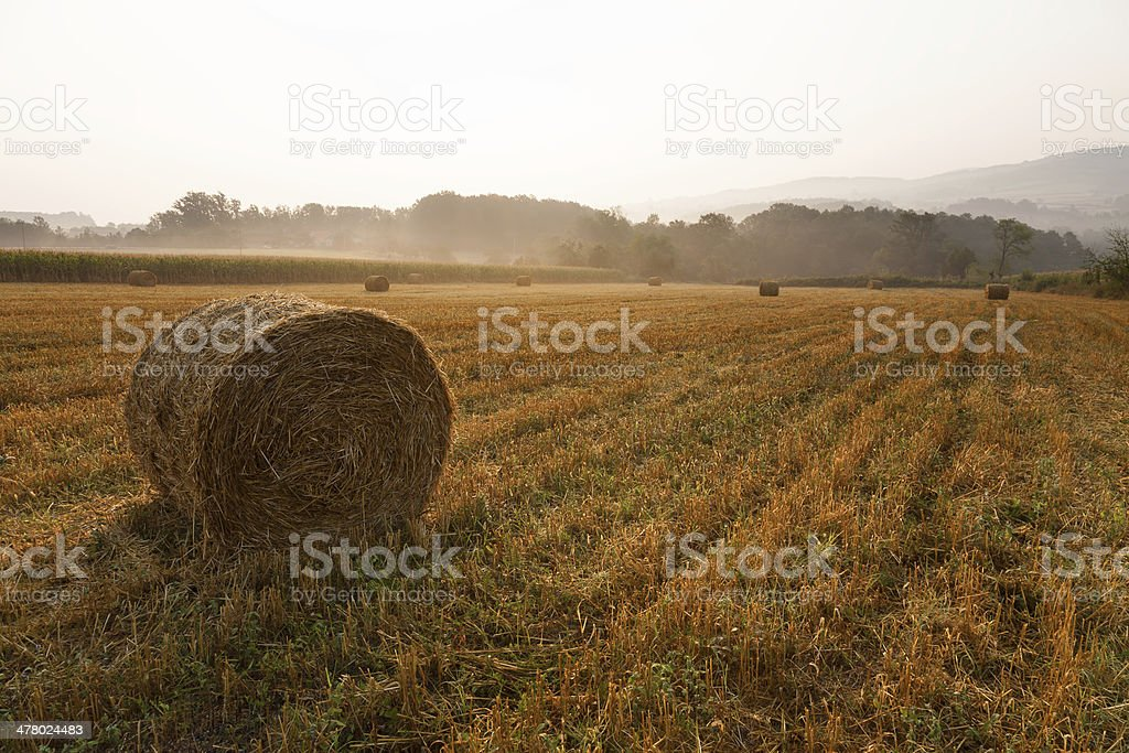 Landscape with haystacks at misty morning royalty-free stock photo