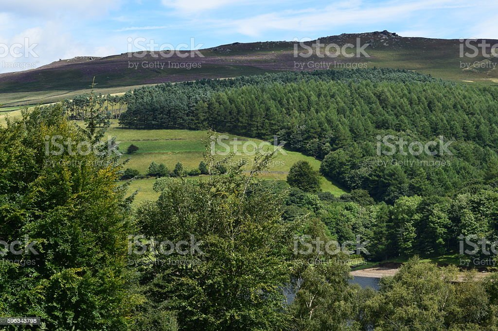 Landscape with hills and trees royalty-free stock photo