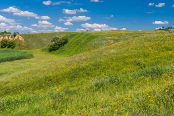 landscape with hills overgrown with wild grasses - single pampas grass bildbanksfoton och bilder