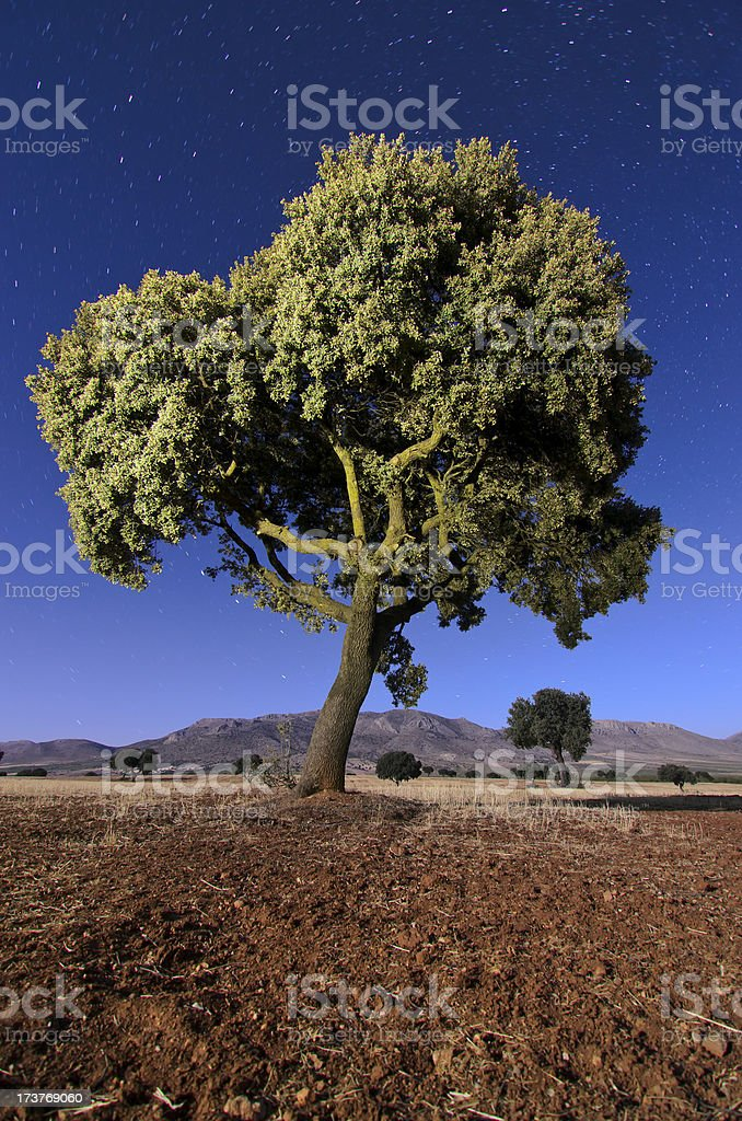 Landscape with holm oaks in Andalucia at night stock photo