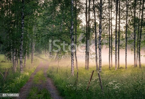 istock Landscape with idyllic road and fog at summer evening in Finland 837498000
