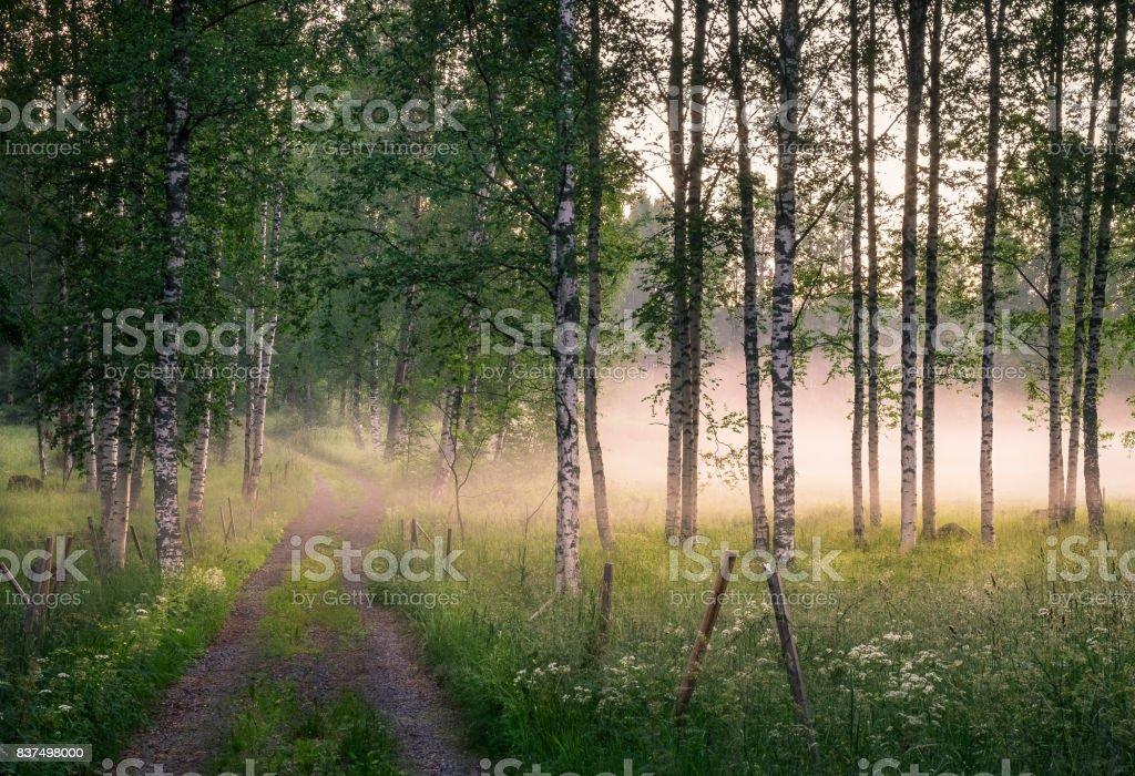 Landschaft mit idyllischen Straßen und Nebel am Sommerabend in Finnland – Foto