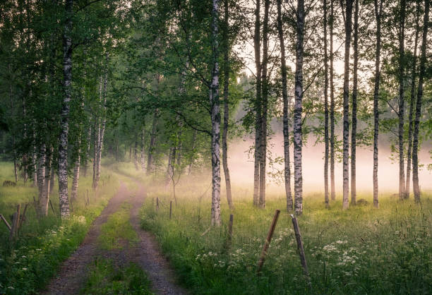 Landscape with idyllic road and fog at summer evening in Finland stock photo