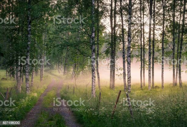 Photo of Landscape with idyllic road and fog at summer evening in Finland
