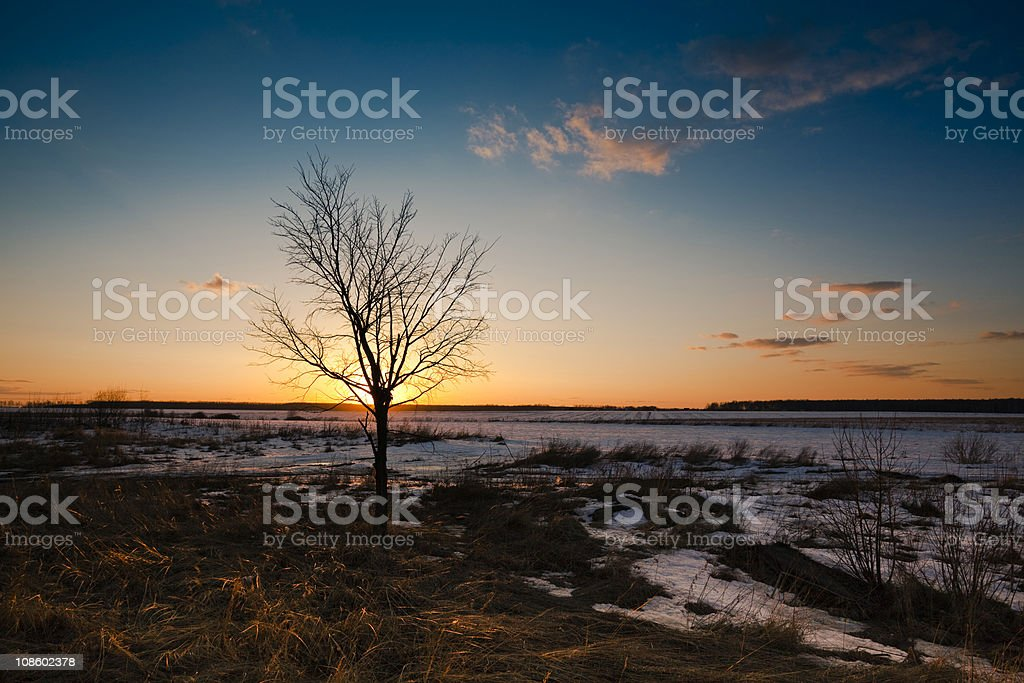 Landscape with Lone Tree royalty-free stock photo