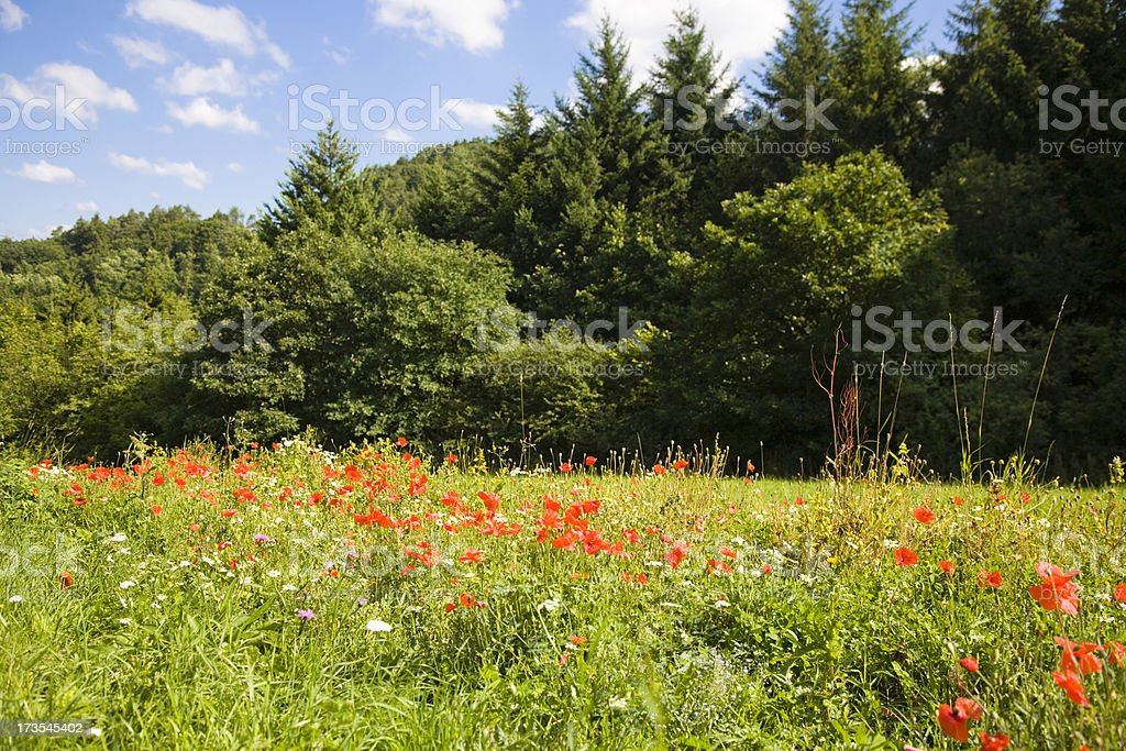 Landscape with Meadow in Summer royalty-free stock photo
