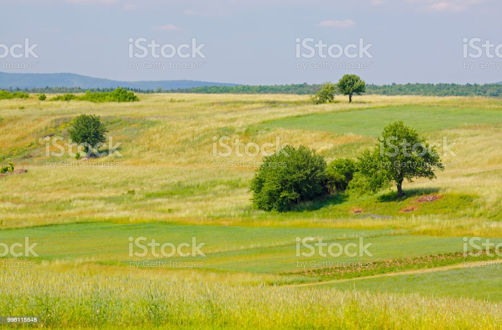 Landscape with meadows and trees stock photo