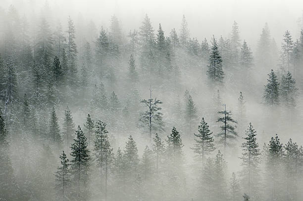 Paisaje con misty forest in Yosemity Valley - foto de stock