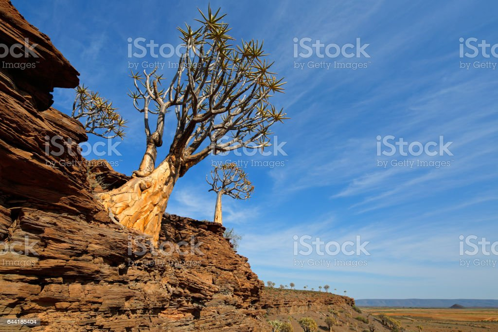 Landscape with mountain and quiver trees, Northern Cape, South Africa stock photo