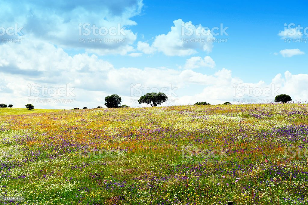 Landscape with multicolored wildflowers and cork trees, Alentejo,Portugal stock photo