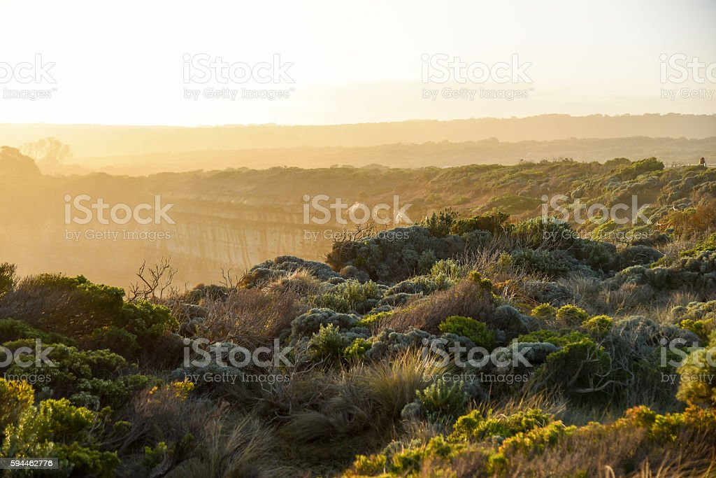 landscape with native plants near great ocean road stock photo