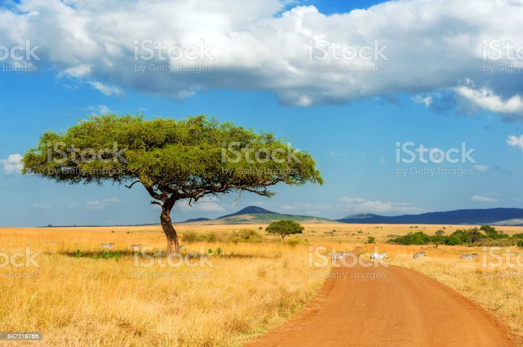 Landscape with nobody tree in Africa stock photo