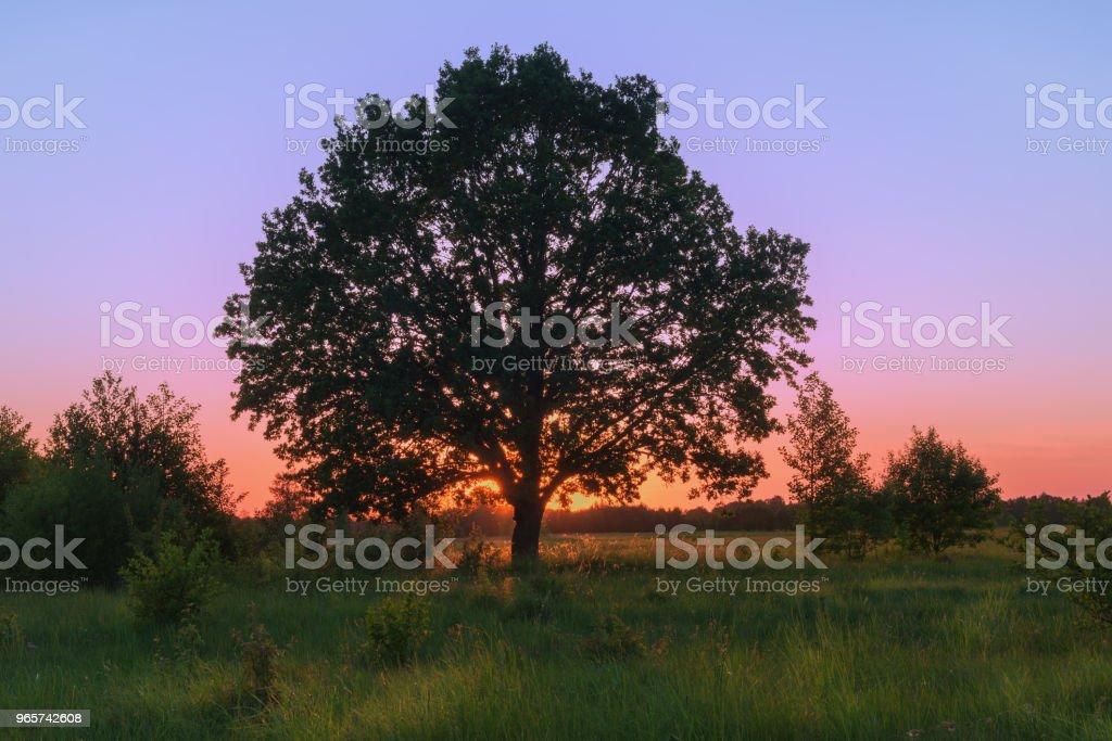 Landschap met eiken lente zonsondergang. - Royalty-free Avondschemering Stockfoto