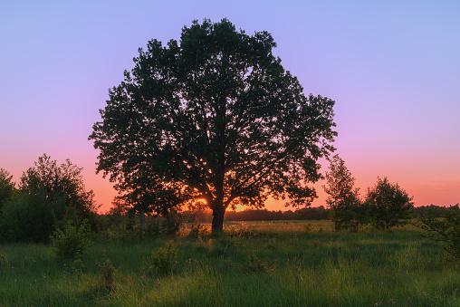 Landschap Met Eiken Lente Zonsondergang Stockfoto en meer beelden van Avondschemering