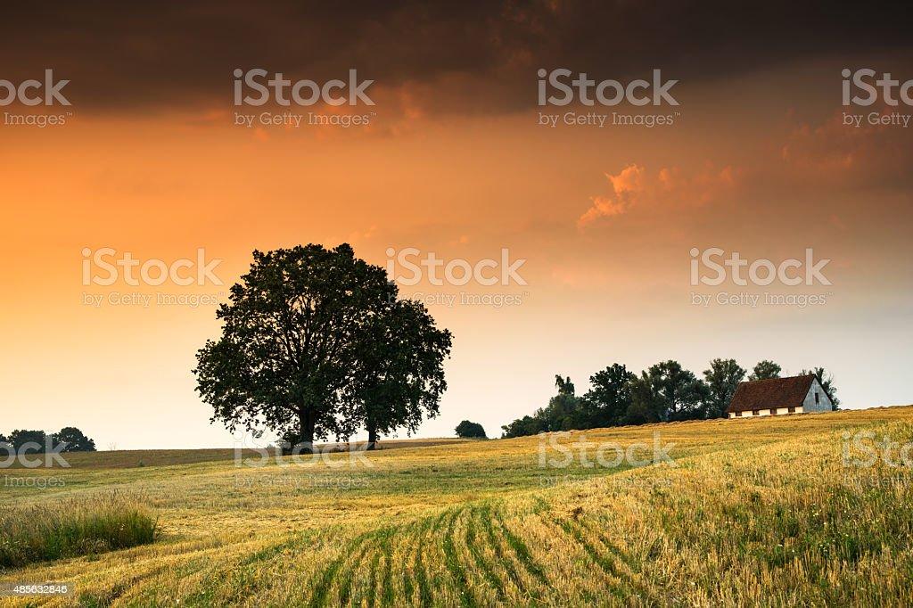 landscape with oaks 5 stock photo