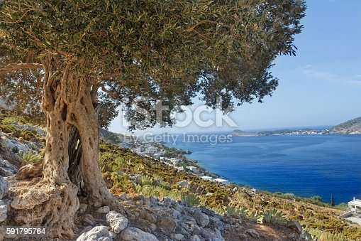 istock Landscape with olive tree and bay on Greek Kalymnos island 591795764