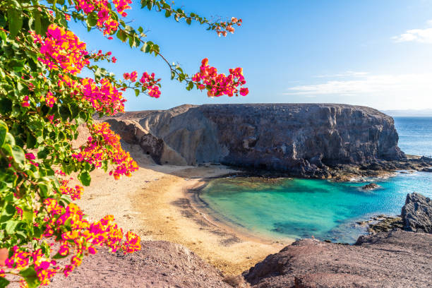 Landscape with Papagayo beach