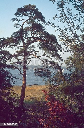 Berlin (West), Germany, 1976. Typical Brandenburg-Berlin landscape with pine tree at the Wannsee.