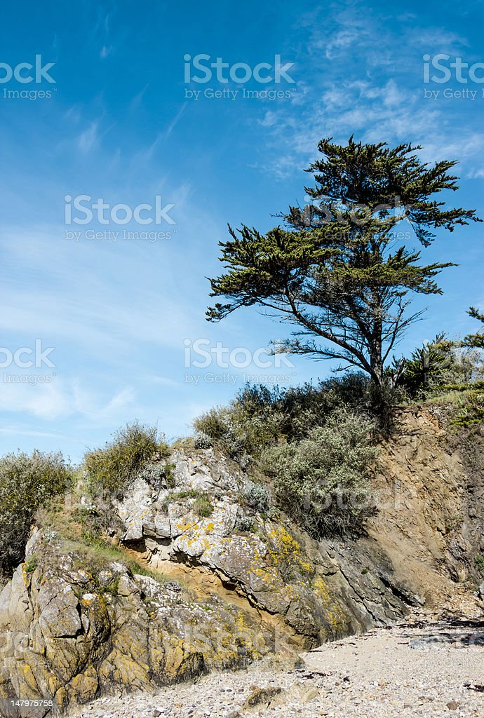 Landscape with pine tree on a cliff stock photo