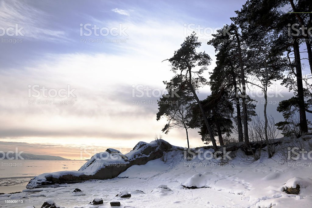 Landscape with pine trees by frozen fjord at sunset. royalty-free stock photo