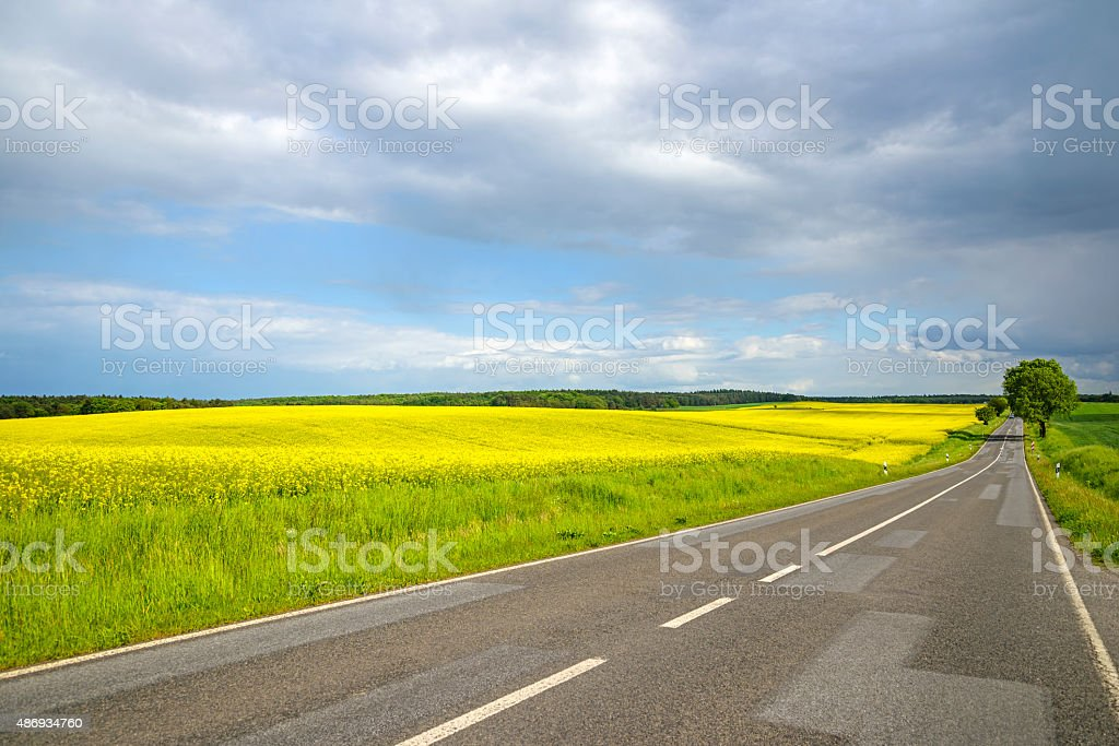 Landscape with rape field stock photo