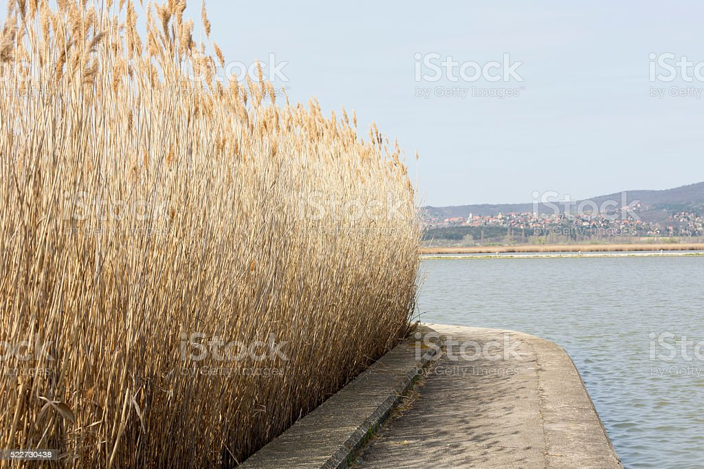 Landscape with reeds at Lake Velence in Hungary stock photo