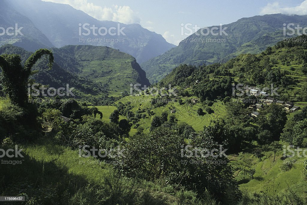 landscape with rice in terraces royalty-free stock photo