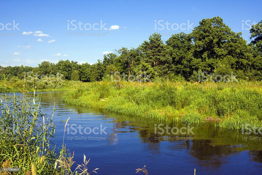 Landscape with river and forest in summer royalty-free stock photo