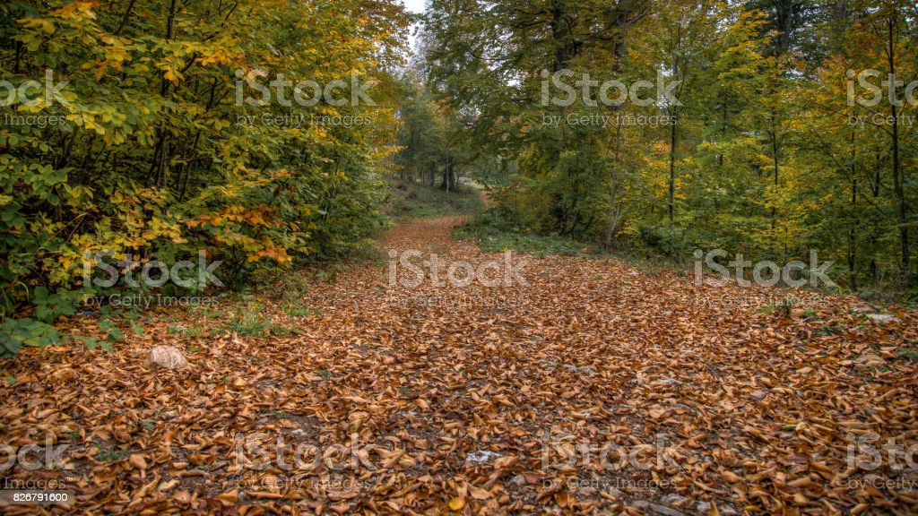 Landscape with road covered with fallen leaves through forest stock photo