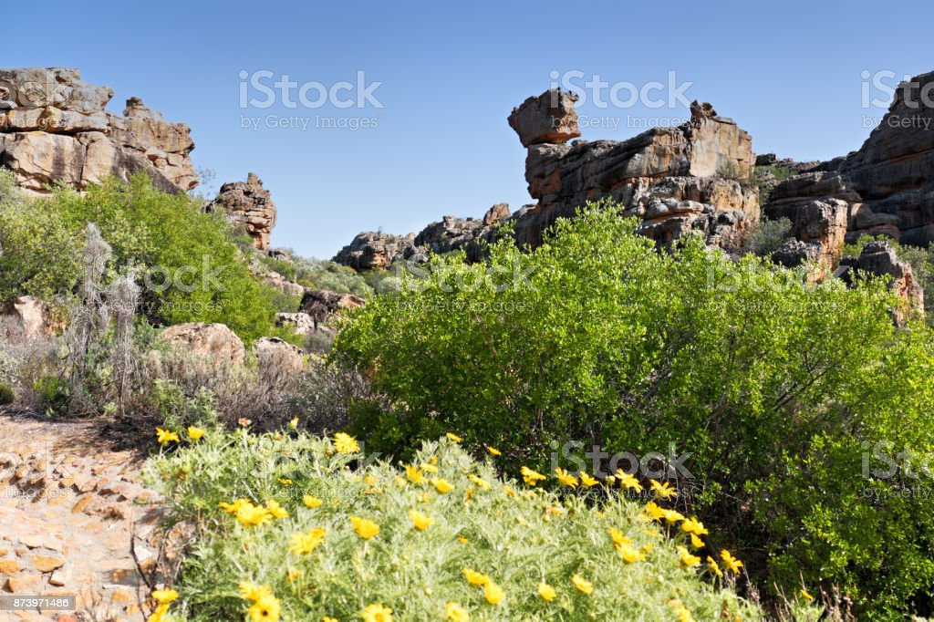 Landscape with rock formations and wildlowers in the Cederberg Mountains, South Africa stock photo
