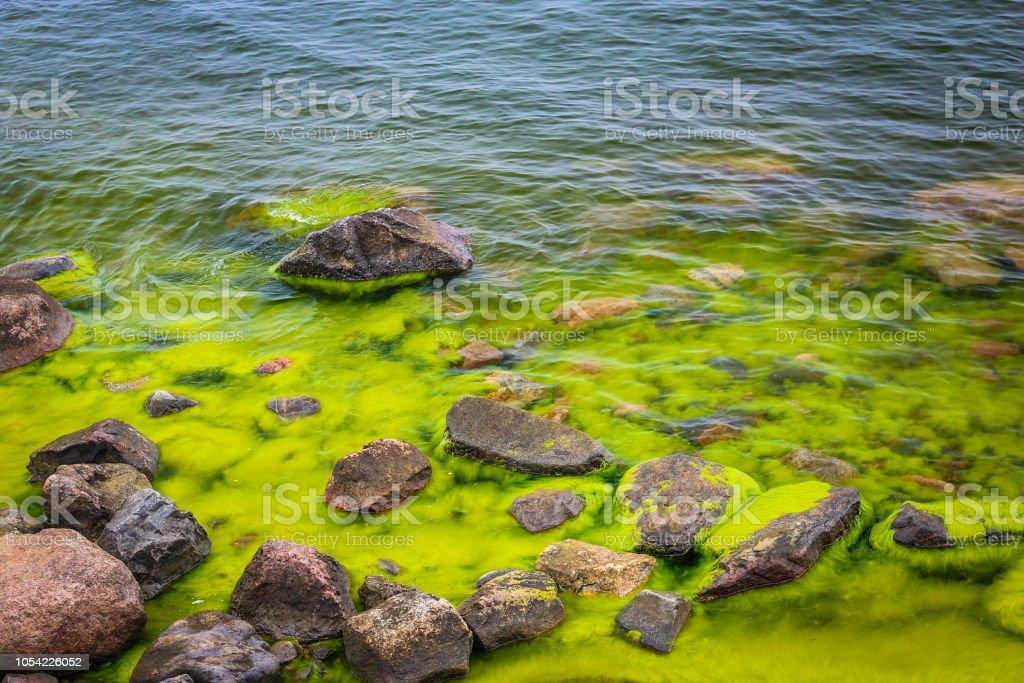 Landschap met zandstenen rotsen en de zee vol met groene algen. foto