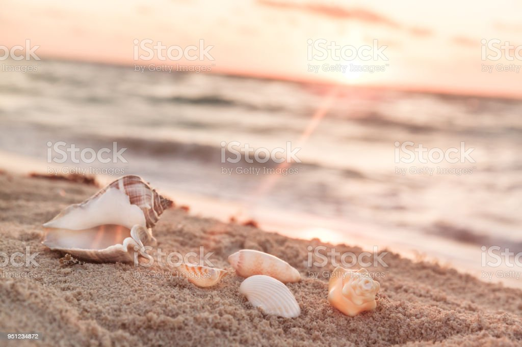 Landscape With Shells On Tropical Beach In The Morning stock photo