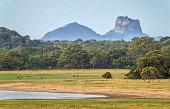 Landscape in Sri Lanka with Sigiriya Rock in the background