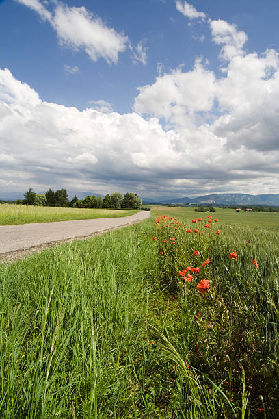 Landscape with Sky and Field near a Road in France