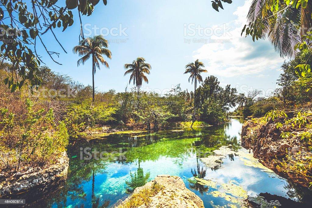 Paisaje con resortes y palmeras, Jamaica. - foto de stock