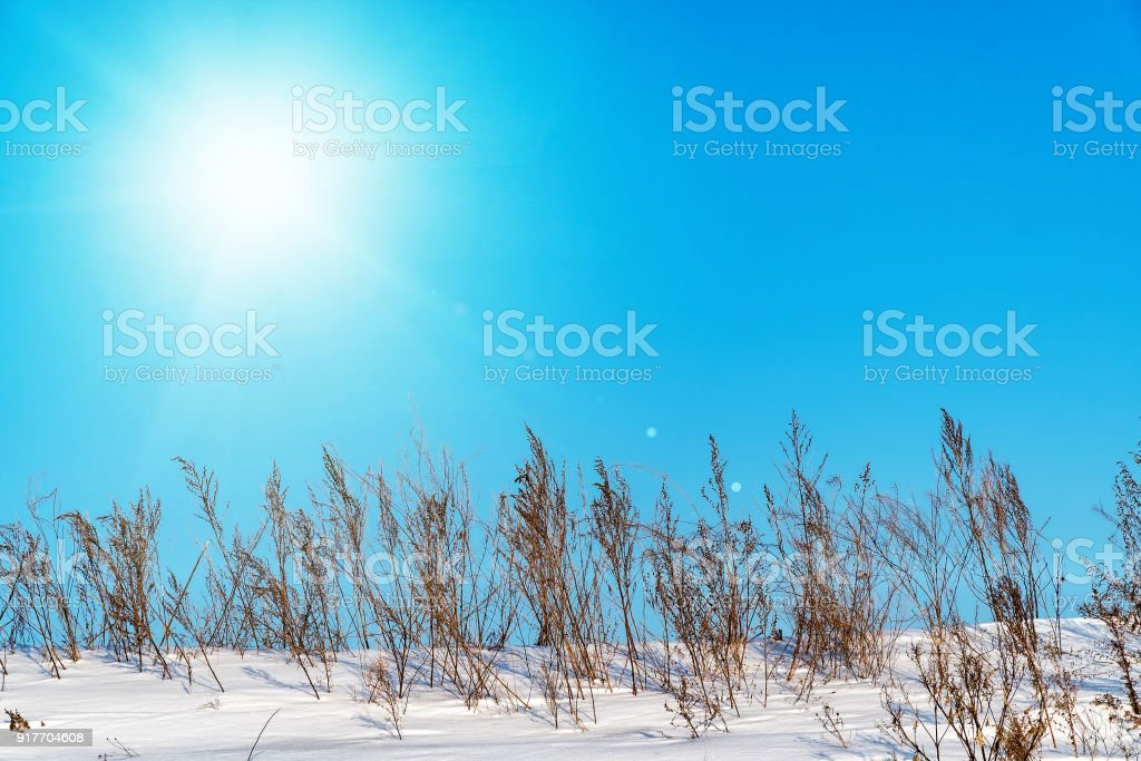 Landscape with sun in the blue sky and dry grass in the snow